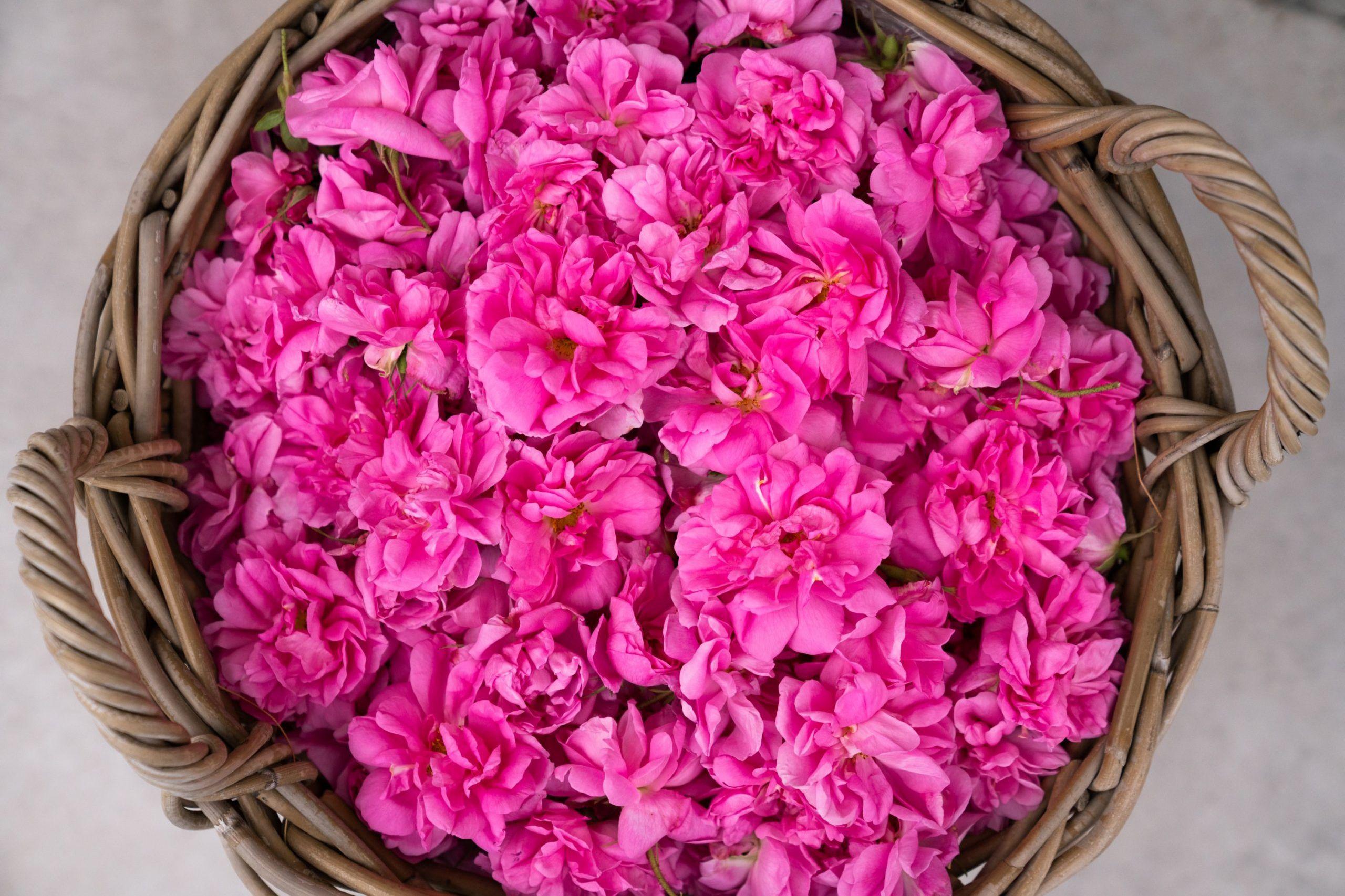 Vrtnica damaščanka